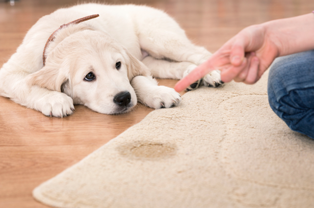 pet stain removal Livermore